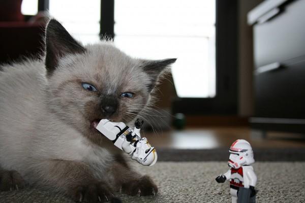 kitten & lego