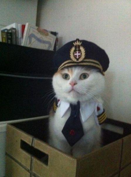 captain kitten