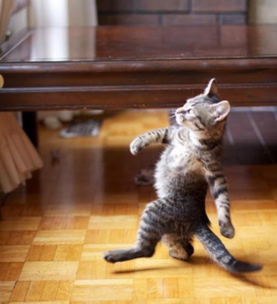 kitten-struttin-547x600.jpg