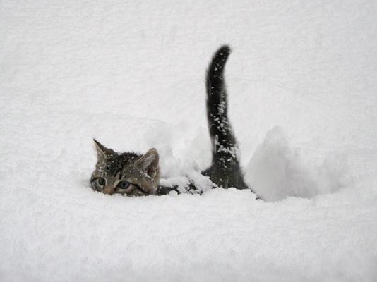 Bildergebnis für kitten winter gif