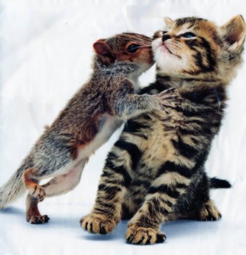 squirrel kissing kitten